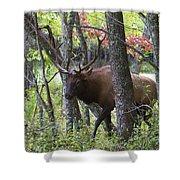 Cataloochee Bull Elk Shower Curtain