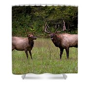 Cataloochee Elk Bull And Cow Shower Curtain