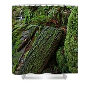 Cataracts Canyon Mossy Log  Shower Curtain