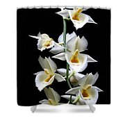 Catasetum Pileatum Orchid  Shower Curtain