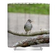 Catbird And Nest Material Shower Curtain