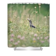 Catbird In The Wildflowers Shower Curtain