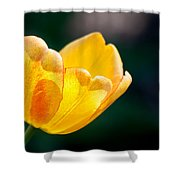 Catching Rays Shower Curtain