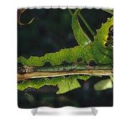 Caterpillar Tam Dao Np Vietnam Shower Curtain