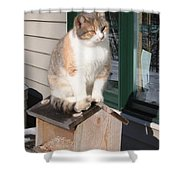 Catfeeder Shower Curtain