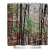 Cathedral In The Woods Shower Curtain