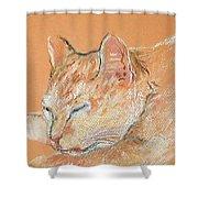 Catnap Shower Curtain