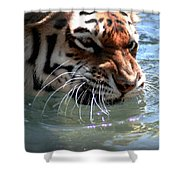 Cats And Water Shower Curtain
