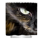 Cats Eye Shower Curtain