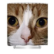 Cats Face Shower Curtain