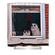 Cats On A Sill Shower Curtain by Randi Shenkman