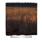 Cattail Bog   #3868 Shower Curtain