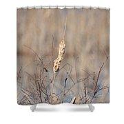 Cattail Gold Shower Curtain