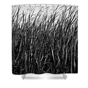 Cattail Reed Background Shower Curtain