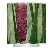 Cattail With Texture Shower Curtain