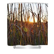 Cattails And Reeds - West Virginia Shower Curtain