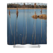 Cattails Cape May Point Nj Shower Curtain