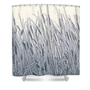 Cattails Typha Latifolia Covered In Snow Shower Curtain