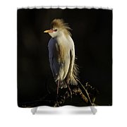 Cattle Egret On Limb Shower Curtain