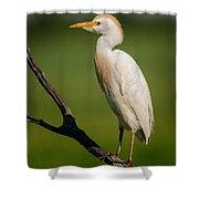 Cattle Egret On Stick Shower Curtain