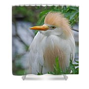 Cattle Egret Shower Curtain by Skip Willits