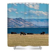 Cattle Grazing At Hawea Lake In Southern Alps In New Zealand Shower Curtain
