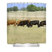 Cattle Grazing Shower Curtain