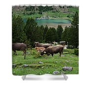 Cattle Grazing In The Pyrenees Shower Curtain