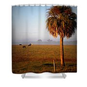 Cattle Grazing On Foggy Morning 1 Shower Curtain