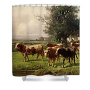 Cattle Heading To Pasture Shower Curtain