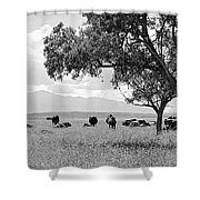 Cattle Ranch In Summer Shower Curtain