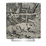 Cattle Resting Shower Curtain