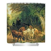 Cattle Watering In A Wooded Landscape Shower Curtain