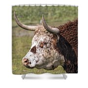Cattle With Horns Side Portrait Shower Curtain