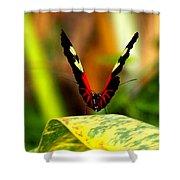 Cattleheart Butterfly  Shower Curtain