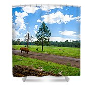 Cattles Roaming Through Hawley Lake Arizona Shower Curtain