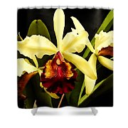 Cattleya Too Shower Curtain