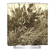 Catus 3 Shower Curtain