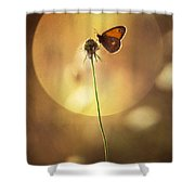Caught In The Sun Shower Curtain