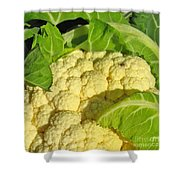 Cauliflower With A Visitor. Square Format Shower Curtain