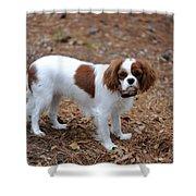 Cavalier Dog Shower Curtain