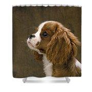 Cavalier King Charles Spaniel Dog Shower Curtain