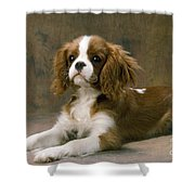 Cavalier King Charles Spaniel Dog Lying Shower Curtain