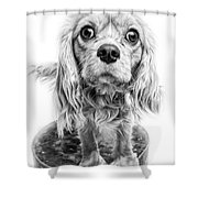 Cavalier King Charles Spaniel Puppy Dog Portrait Shower Curtain