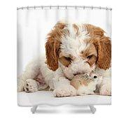 Cavapoo Puppy And Roborovski Hamster Shower Curtain