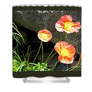 Cavy Poppies Shower Curtain