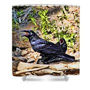 Caw And Friend Shower Curtain