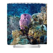 Cayman Reef Shower Curtain