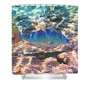 Cayman Snapper Shower Curtain