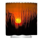 Cayo Grande Palm Tree Sunrise Shower Curtain